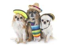 #ElPerroDeMéxico DogHero