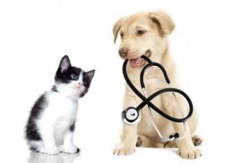 Médicos y mascotas en contingencia