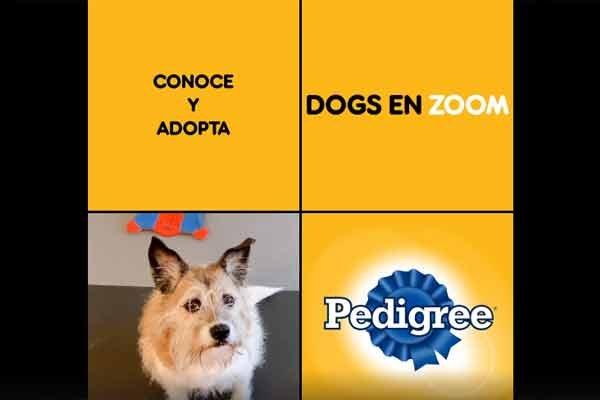 adopción de perros Pedigree