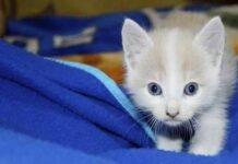 cómo tener un gatito sano